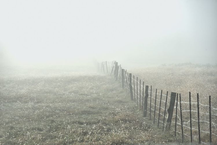 Wooden posts on field in foggy weather