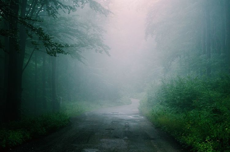 Walking on a silent foggy road Peace Silence Travelling Travel Fog Tree Plant Environment Nature Beauty In Nature Tranquility Scenics - Nature Road Green Color Tranquil Scene No People Forest Idyllic Spooky Land Rain Outdoors Landscape Textured Effect