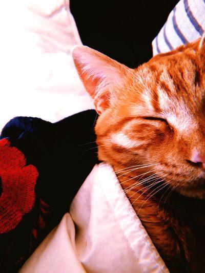 lilo Cat