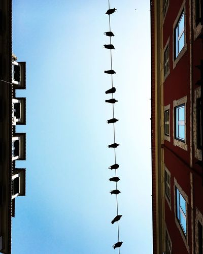 Buildings Electric Lines Birds Animals In Line Sky Blue Sky City Street Streetphotography Light And Shadow Windows Reflection Lisboa Lisbon Portugal Mmaff From My Point Of View Eye4photography  EyeEm Gallery Taking Photos Hello World Eyeem Animals