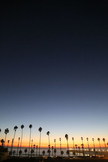 Low angle view of silhouette trees against clear sky during sunset