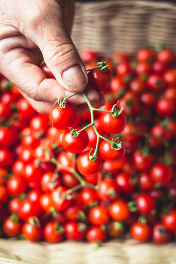 Tomato cherry in basket Tomato in hand South Asia Abundance Body Part Close-up Finger Food Food And Drink Freshness Fruit Hand Healthy Eating Holding Human Body Part Human Hand Large Group Of Objects One Person Real People Red Ripe Selective Focus Wellbeing