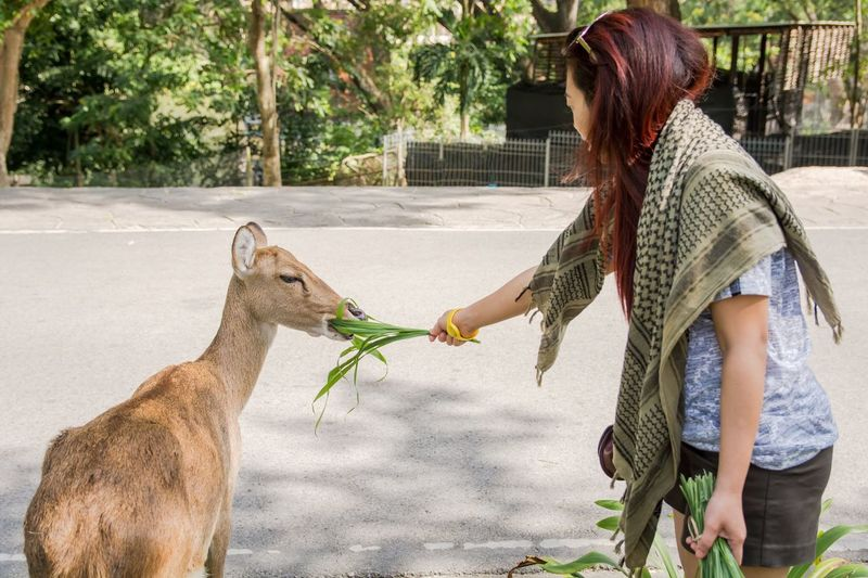 Side view of young woman feeding plant to deer in zoo