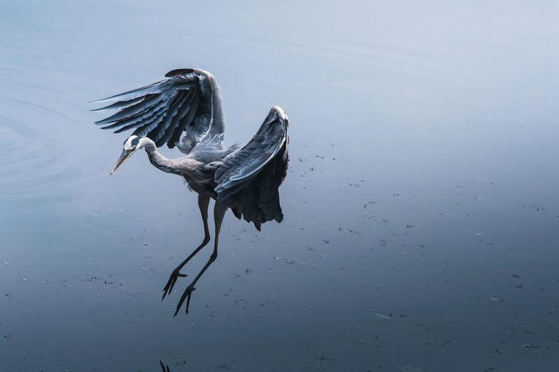 Bird on lake