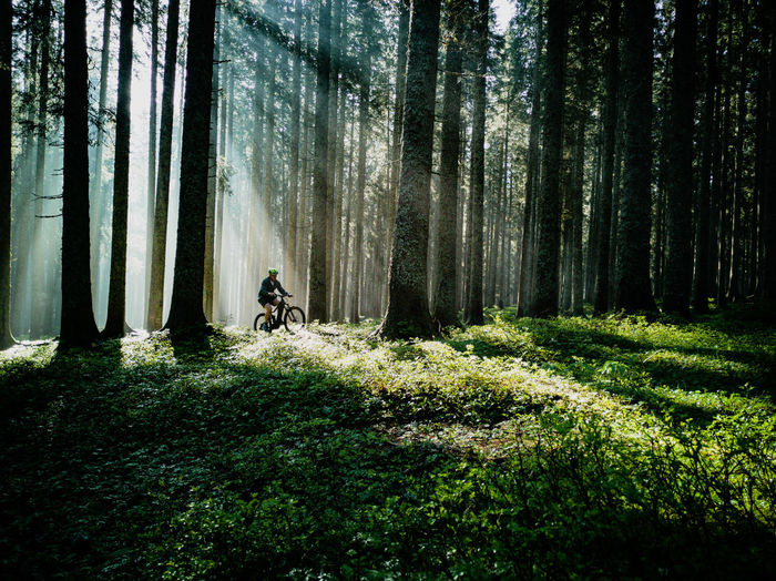 Morning fogy ride #Mtb #emtb Animal Animal Themes Beauty In Nature Day Domestic Domestic Animals Forest Growth Land Mammal Nature One Animal Outdoors Pets Plant Tranquility Tree Tree Trunk Trunk Vertebrate WoodLand