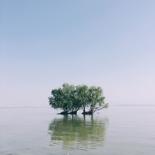 Tree By Lake Against Clear Sky