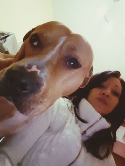 Portrait Looking At Camera Headshot Close-up Indoors  Adults Only People Togetherness Adult Young Adult Human Body Part Day Relaxing Dog Love Família Mi Amor❤ Domestic Life Pit Bull Terrier Mi Mascota Women Animal Themes Domestic Animals One Animal