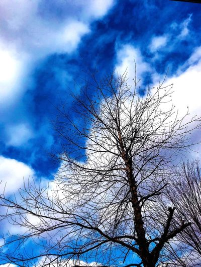 Bare Tree Sky Cloud - Sky Tree Low Angle View Branch Plant Tranquility Nature Day Beauty In Nature Scenics - Nature Tranquil Scene Outdoors Blue Silhouette Tree Trunk Winter Dead Plant