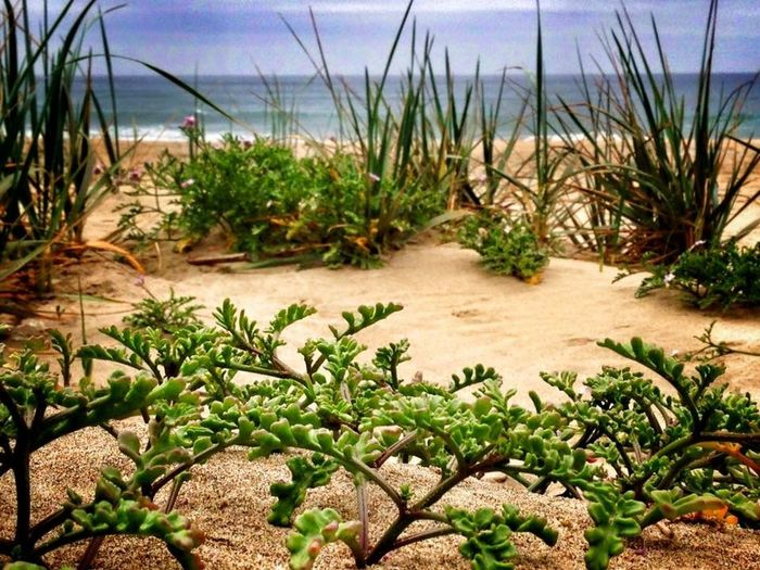 The Forest Underfoot Beach Forest Groundlevel Macro IPhoneography Beachphotography Nature Photography Horizon Plants Beach Photography