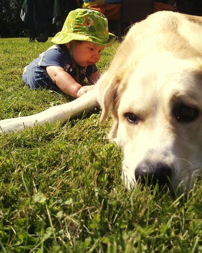 Summertime Dogslife Dogs Dogdaysofsummer Babies Pet Portraits