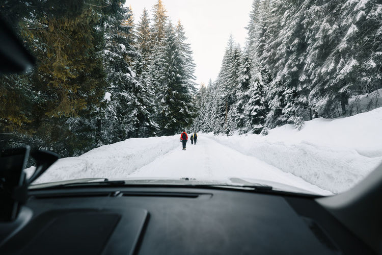 Rear view of people on snow covered mountain road and coniferous trees