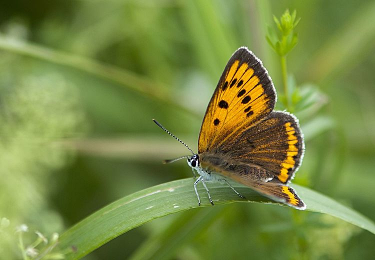 Close-up of butterfly perching on plant outdoors