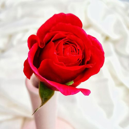 Red Rose Flower Rose - Flower Petal Flower Head Nature Fragility Beauty In Nature Red Bouquet Rose Petals No People Freshness Garden Photography Beauty In Nature Close-up Red Color Red Flower Rose Rose Flower Cut Flower Romance Love