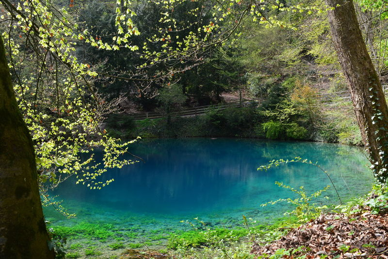 Reflection Water Beauty In Nature Reflection Lake No People Tree Nature Blue Water Blautopf Blaubeuren Germany🇩🇪 Diving Höhle Deep Hole Nikon D5200 Nikon D5200 Nature Photography Backgrounds The Week Of Eyeem EyeEm Best Shots - Nature EyeEmNewHere Schwäbische Alb Baden-Württemberg  The Great Outdoors - 2017 EyeEm Awards