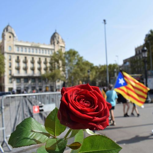 Barcelona Rambla SPAIN Catalunya Flag Red Flower Building Exterior Outdoors Architecture Day Plant Built Structure Politics And Government No People Nature Close-up Sky City