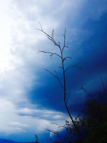 Natural Beauty Sky And Clouds Sky_collection Tree And Sky Relaxing Sky_collection Ciudad Universitaria Simple Beauty Simple Things In Life Showcase June Colour Of Life Color Palette Colour Palette Color Palette Blue Sky And Clouds