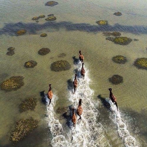 Wild Horses of Shackleford Banks, North Carolina ❤️❤️💙💙 Water Nice Places  Amazing View Cool Picture Hello World ❤ First Eyeem Photo I Love Travel Real Picture You Follow My Eye Em 💙 I Follow Back Picture