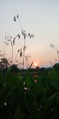Bird Flying Sunset Flamingo Flock Of Birds Mid-air Leaf Rural Scene Sky Animal Themes