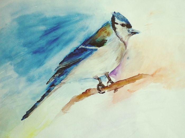 Bird Drawing Watercolor Art акварель рисунок акварелью Painting