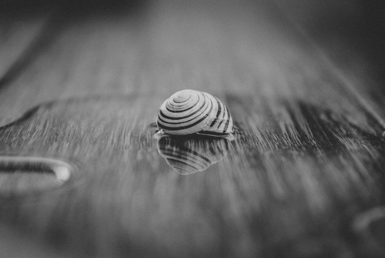 BLACK AND WHITE SNAIL Animal Shell Animal Themes Animal Wildlife Close-up Nature No People One Animal Outdoors Selective Focus Snail Spiral Swirl Wildlife