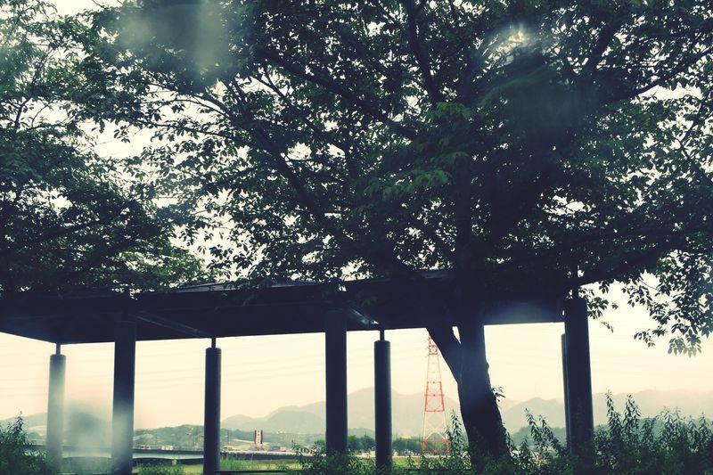 雨が強かった… IPhoneography EyeEm Nature Lover 桜の木 帰り道