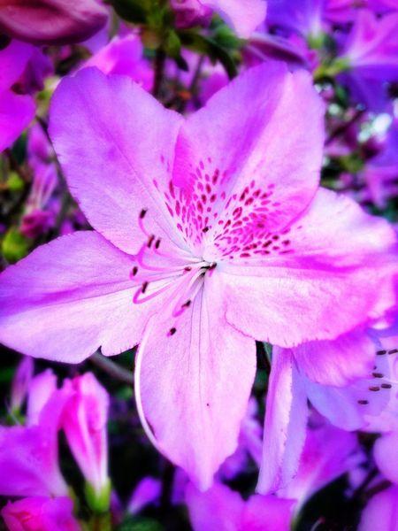 Flowers Spring Pink Blooming