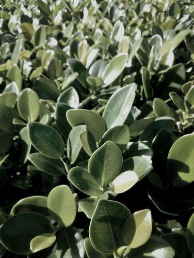 Plants Nature Green Steppingoutside