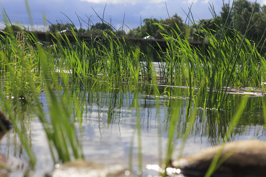 Beauty In Nature Close-up Day Focus On Foreground Grass Green Color Growing Growth Idyllic Lake Lakeshore Nature No People Non Urban Scene Non-urban Scene Outdoors Plant Reflection Scenics Selective Focus Sky Standing Water Tranquil Scene Tranquility Water