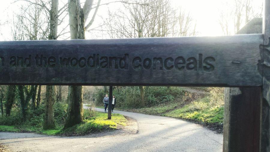 Secrets of the Woodlands Fall Beauty