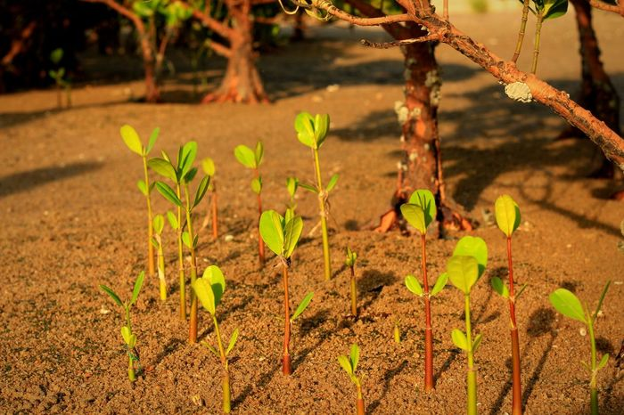 Nature's Spring Nature Growth Plant Beauty In Nature Outdoors No People Sunlight Sapling Beauty In Nature