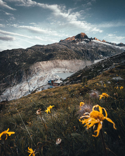 Mountain Flowering Plant Flower Beauty In Nature Plant Sky Nature Scenics - Nature Cloud - Sky Yellow Mountain Range Environment Day No People Land Non-urban Scene Growth Tranquility Tranquil Scene Field Outdoors