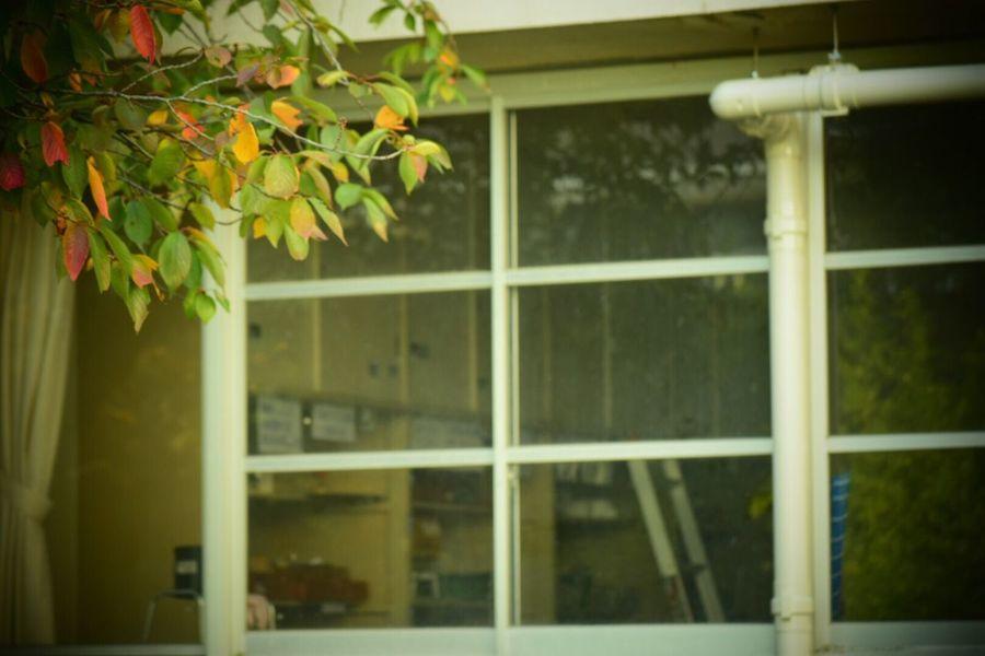 生きる 日常 学校 Day Built Structure Building Exterior Life Force Window