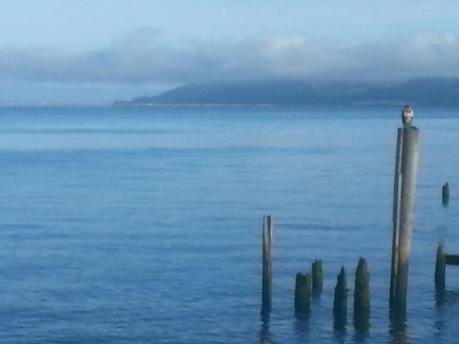 Sea Water Horizon Over Water Nature Tranquility No People Outdoors Scenics Beauty In Nature Sky Tide Awe Eaglet Eagle Bird Photography Columbia River Reflection Northcoastrecovery Astoria, OR Astoria, Oregon Water's Edge Beauty In Nature Wooden Post Cloud - Sky Tranquility
