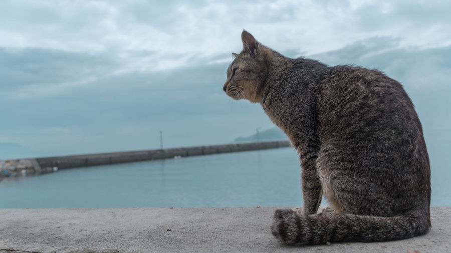 Side view of a cat looking away against sky