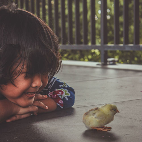 Portrait of cute boy looking at bird