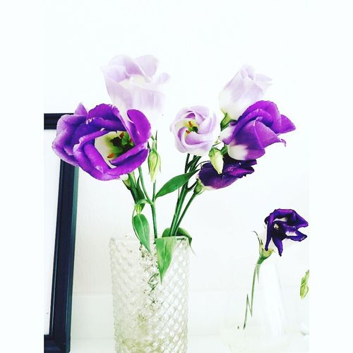 Flower Vase Freshness Purple White Background Flower Arrangement Indoors  Bouquet No Flowers No Life Home Sweet Home My View
