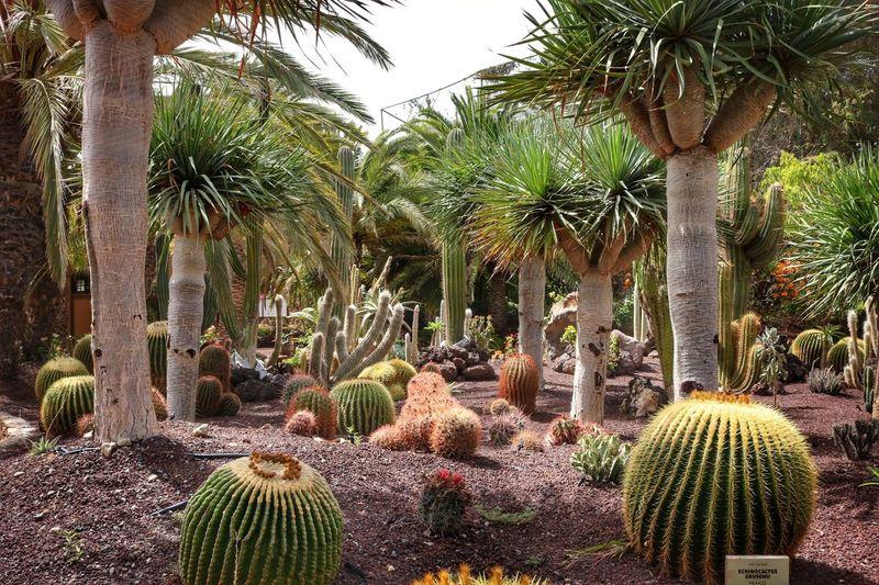 Roma Whp HDR Fuerteventura Followme Nature