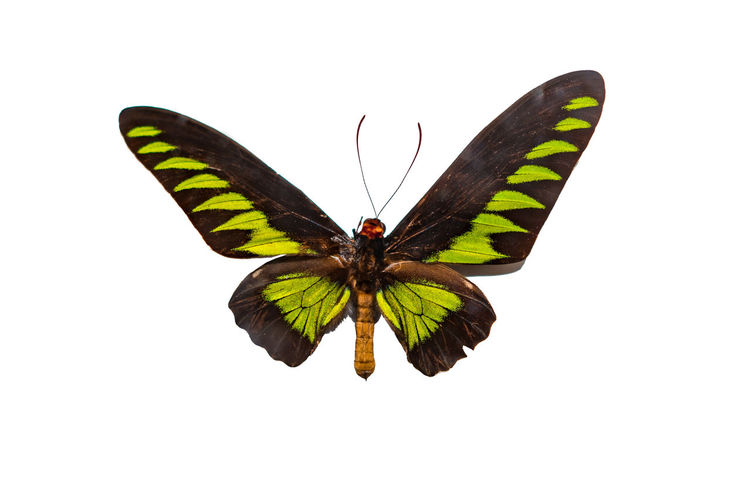 Close-up of butterfly flying over white background