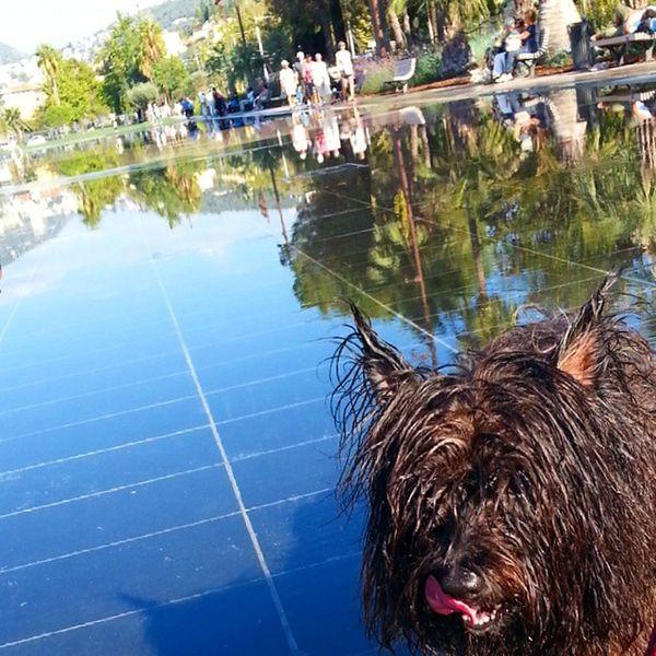 Buschi ... : ) Dogs Chiens Hunde Cairn cairnterrier