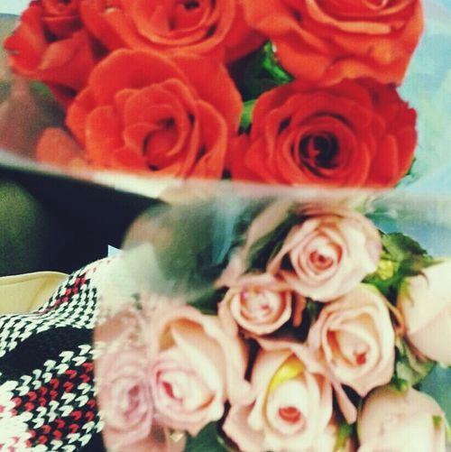 Rose🌹 Flower 꽃