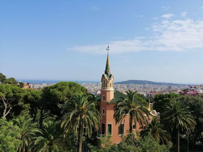 Tree City Palm