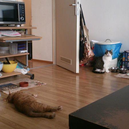 Mein Kater Katzen Cats I Love My Cat I Love My Cat ❤ Meine Katze Mein Liebling März2015 Haustiere kurz vorm verhungern.