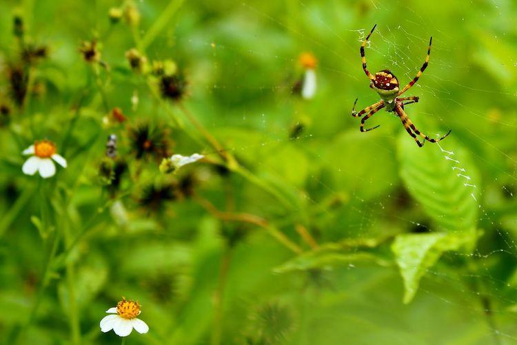 Spiders Garden
