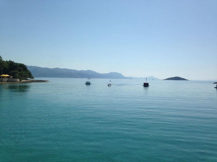 Amazing Croatia Dolphins Holiday Lovethis Remember Sea Transparent