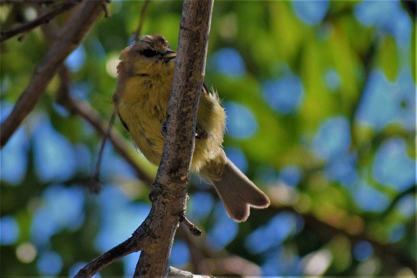 Animal Themes Animal Wildlife Animals In The Wild Bird Branch Day No People One Animal Outdoors Tree Vertebrate
