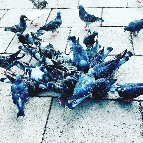 AndjelaMancic Birds Pigeon Grey Nature First Eyeem Photo EyeEm Gallery EyeEm Best Shots