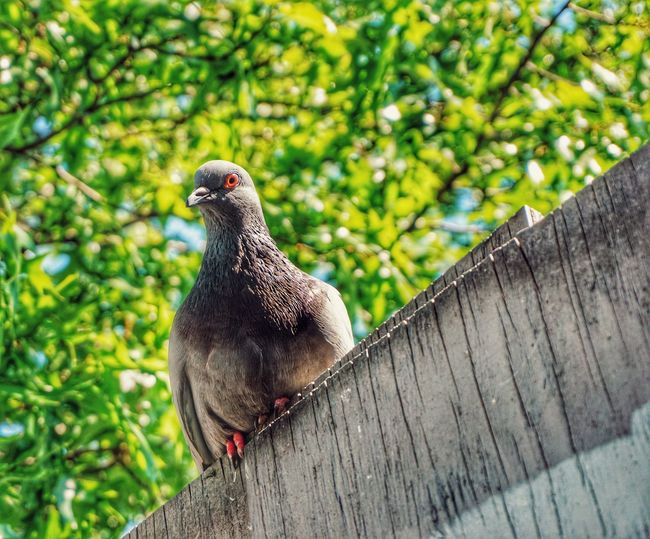 https://youtu.be/mxzgwJ8tSE0 Green 2019 Niklas Storm Juni Bird Perching Tree Close-up Fence Dove - Bird Pigeon My Best Photo The Street Photographer - 2019 EyeEm Awards
