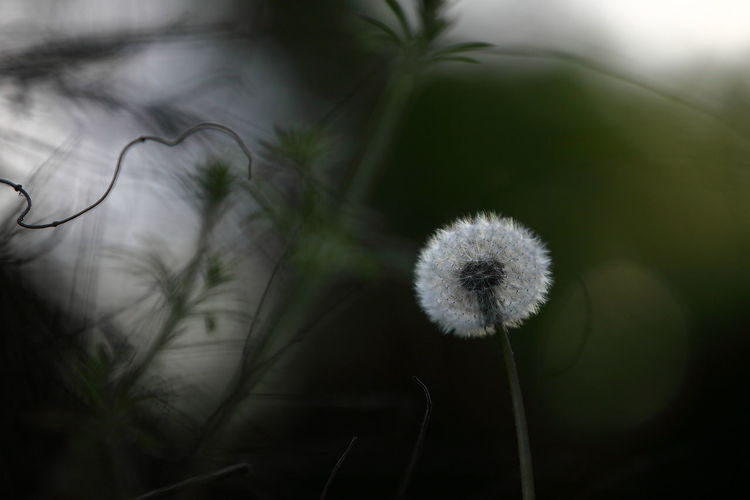 Beauty In Nature Close-up Flower Head Focus On Foreground Green Color Nature_collection Smothies Sunlight And Shadow White Color