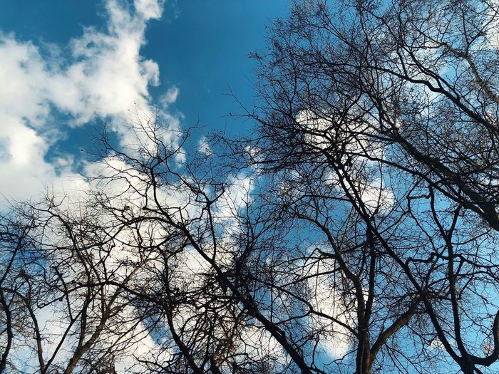 Sky Blue Color Low Angle Transition Sky And Trees Tree Low Angle View Sky Plant Day Cloud - Sky Outdoors Animal Themes Beauty In Nature Bare Tree Branch Tranquility Growth Vertebrate Backgrounds Full Frame No People Nature Tree Bird Flying