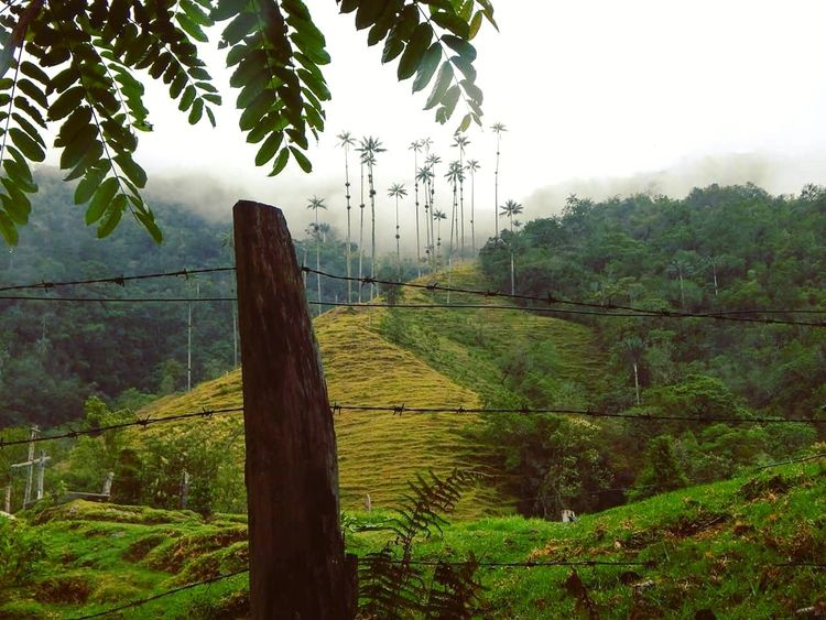 The remarkable Cocora Valley, Salento, Colombia. Nature Beauty In Nature Colombia Travel Destinations Traveling Travel Travelphotography Vacations Travel Photography Postcard Mountain Scenics Cocora Valley Colombia ♥  Salento Colombia Coffee Region Landscape Landscape Photography South America